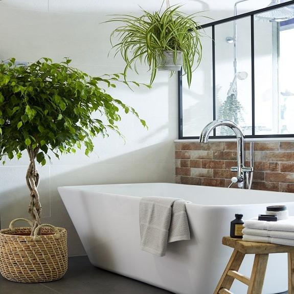 photo ficus installé à côté d'une baignoire et chlorophytum suspendu au-dessus d'une baignoire